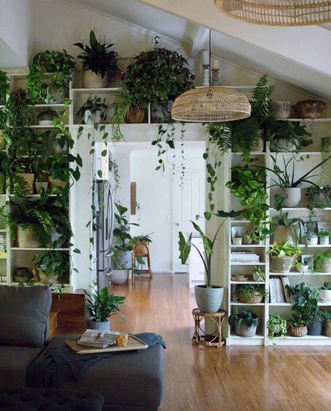 plants - home decor picture