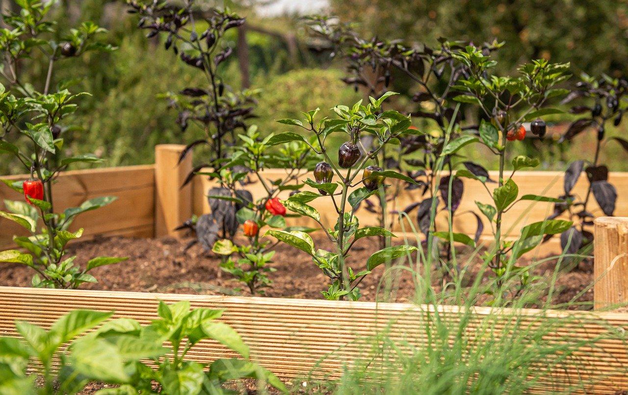 raised garden