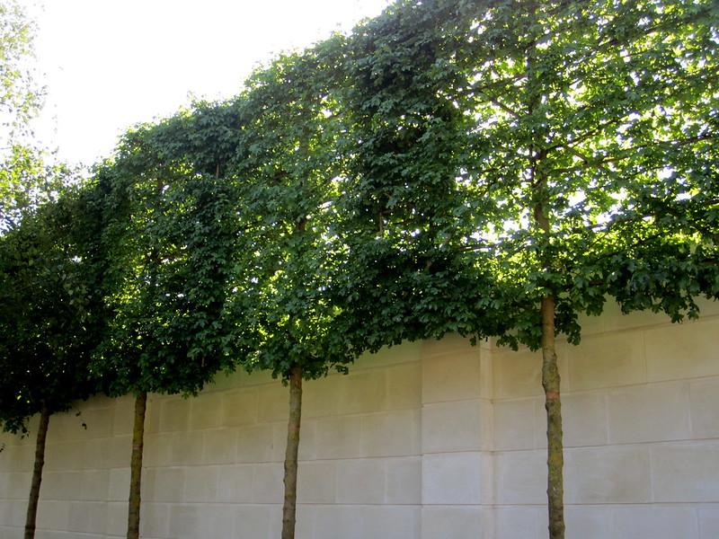 tree privacy