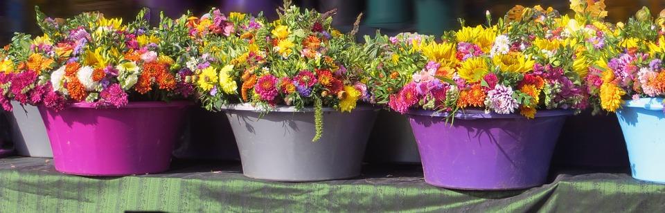 add pot plants